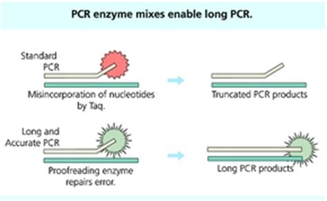 Long Accurate Pcr Pcr Amplification Sigma Aldrich Expand Template Pcr System Roche