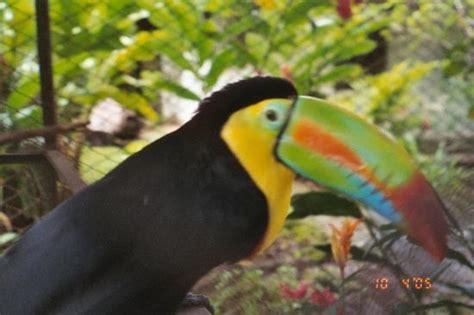 fruit loops bird green season great season villas sol hotel