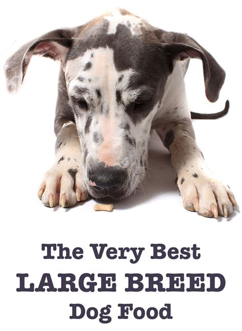 best food for large breeds best large breed dogs for pets breed dogs spinningpetsyarn