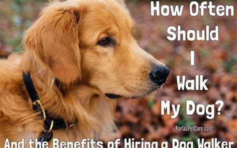 how often should you walk your how often should i walk my benefits of hiring a walker karla s pet care in