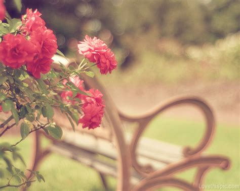 tumblr themes free beautiful vintage like flowers pictures photos and images for