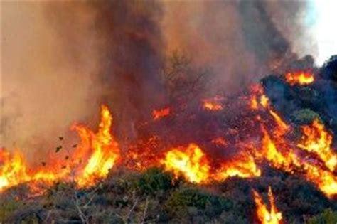 imagenes ecologicas impactantes las consecuencias de un incendio forestal para las