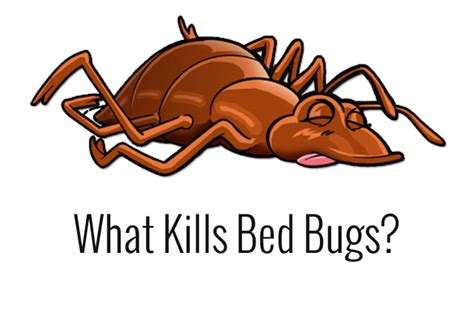how to kill bed bug how to kill bed bugs and make sure they never return bed bug guide