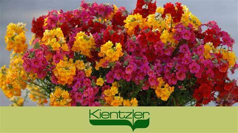 Pflanzen Auf Balkon by Farbenfroh Pflanzen Auf Balkon Terrasse Mit Sunsatia
