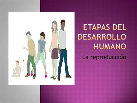 etapas del desarrollo etapas del desarrollo humano