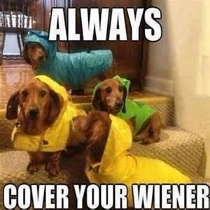 Funny dog meme jokes memes amp pictures