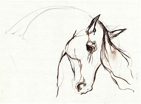 Sketches Horses by Sketch By Tarantella