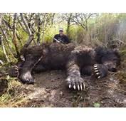 Bear Story  Alaska 24hourcampfire