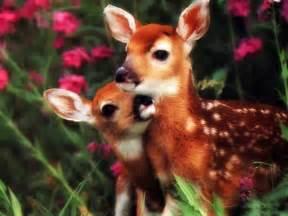 baby animals wild animals wild life