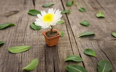 wallpaper flower in pot pretty flower pot wallpaper hd desktop wallpapers 4k hd