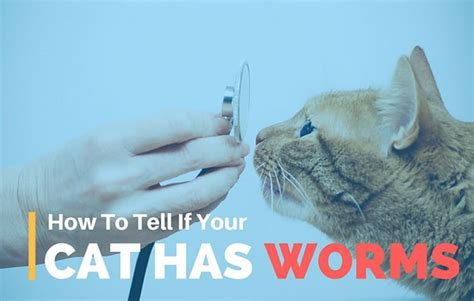 how to tell if your has worms how to tell if your cat has worms 7 simple symptoms to look out for tinpaw