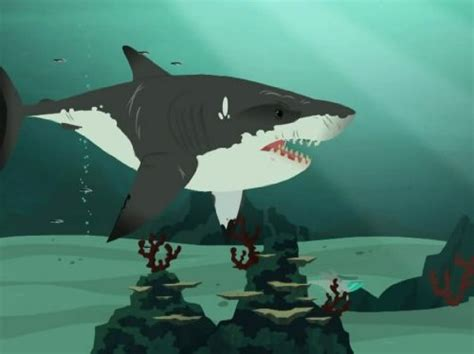 wild kratts stuck  sharks tv episode