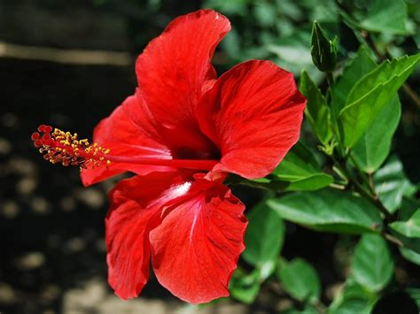 flower wallpaper zip hibiscus flower wallpapers wallpaper cave