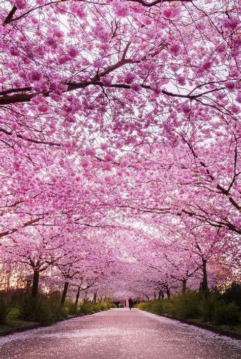 imagenes de japon paisajes im 225 genes de paisajes gratis de paisajes japoneses