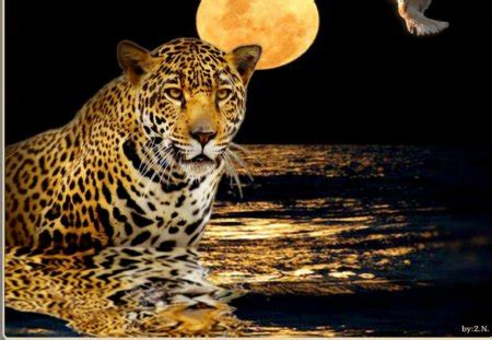good night cats animals background wallpapers