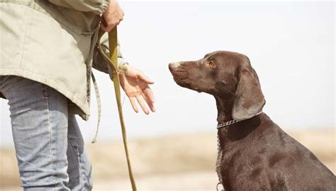 obedience school for dogs best obedience school for dogs in the us how to the right one