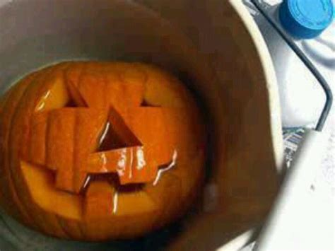 preserve pumpkins h a l l o w e e n pinterest