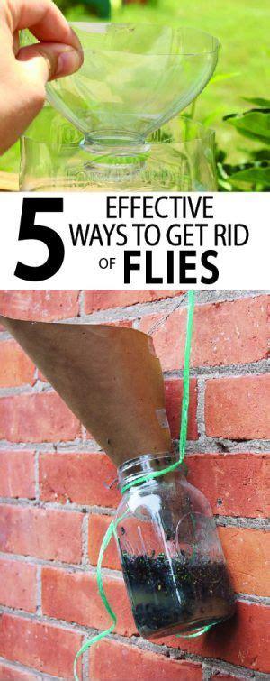 7 Ways To Get Rid Of Fruit Flies by Best 25 Get Rid Of Flies Ideas On Getting Rid