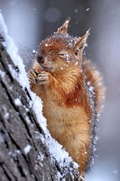animals in the winter 1000 ideas about winter on pinterest travel photography