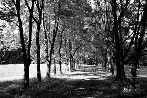 tree farms near appleton appleton farms in september bw ipswich ma 1