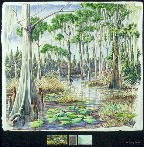 okefenokee sw on map okefenokee sw map book covers
