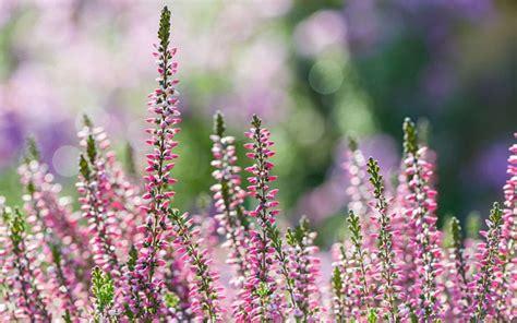 plants  flowers  winter garden colour