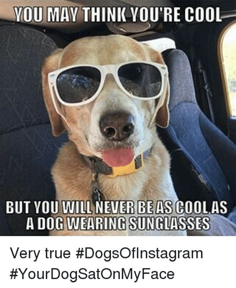 Dog With Glasses Meme - 25 best memes about dogs wearing sunglasses dogs