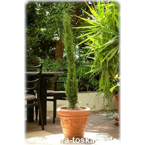 sichtschutz mit pflanzen 1230 cupressus sempervirens pyramidalis stricta