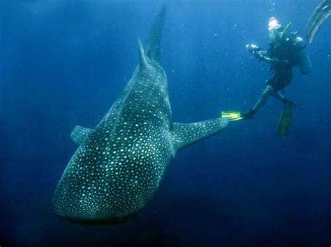 Top 10 Best Diving Sites in Indonesia   Indonesia Travel Guide