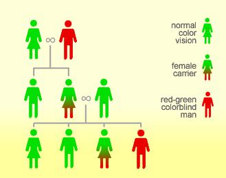 color blindness genetics what is color blindness colblindor