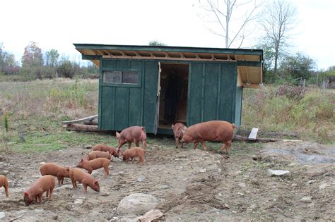 pig house image gallery pig house