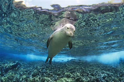 aquatic mammals www imgkid the image kid has it
