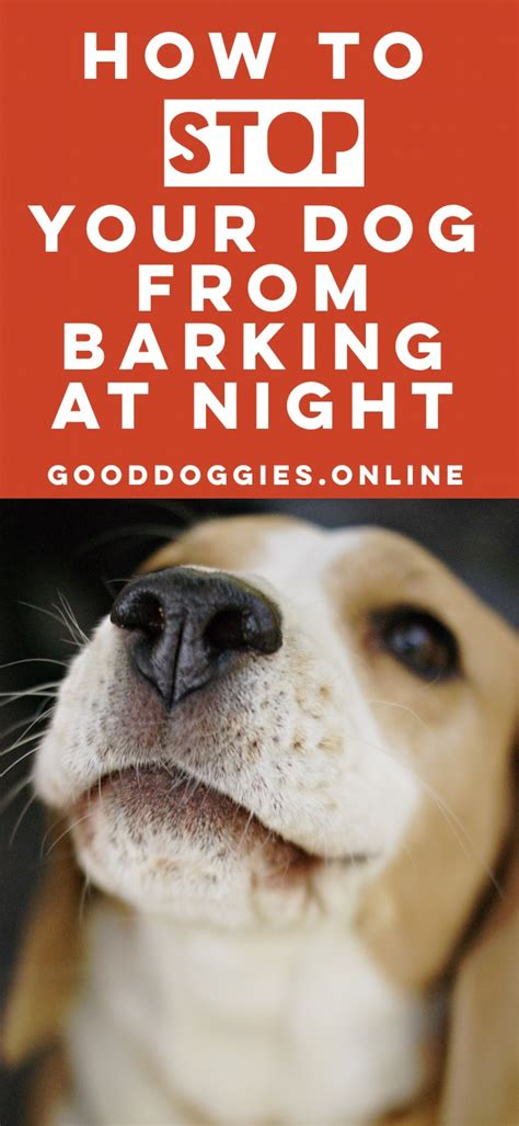 how to stop your puppy from barking how to stop your dog barking at night good doggies online