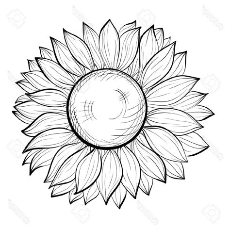 sunflower outline drawing at getdrawings com free for
