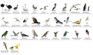 aves untamed science