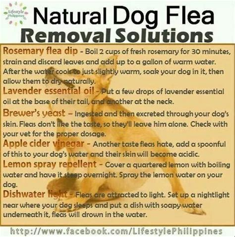 flea removal for dogs flea removal solutions home made cleaning products pi