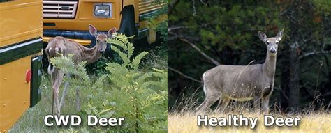 Michigan confirms first case of CWD in free-ranging white ...