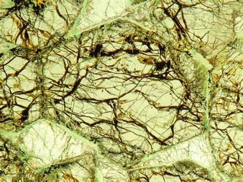 olivine thin section olivine geosecmia