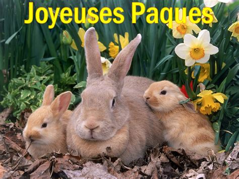 image gallery lapin paques