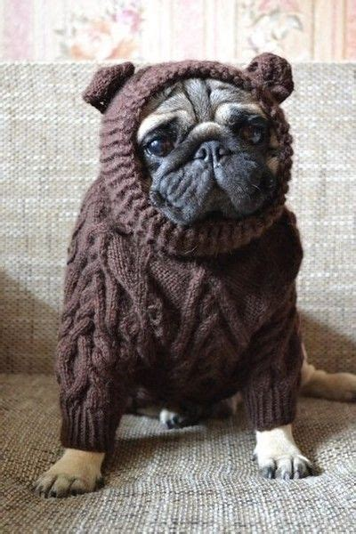 pugs in sweaters 3536 best images about pugs adorable fur babies on