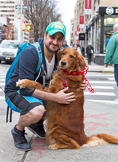 louboutin golden retriever meet the bringing to new yorkers one hug at a time new york post