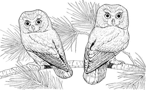 hard coloring pages of owls owl coloring pages for adults hard printable kids