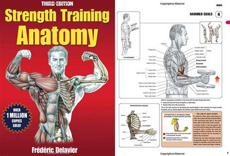 anatomy of a a novel books book review strength anatomy 3rd edition h3