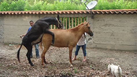 caballos cojiendo yeguas list of synonyms and antonyms of the word monta de yeguas