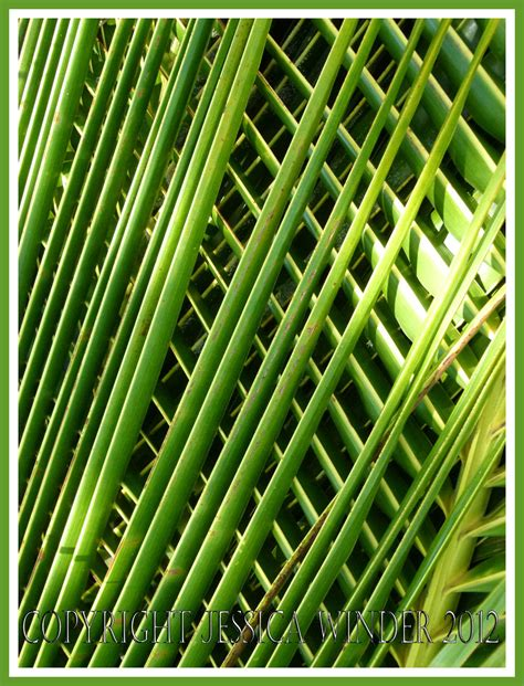 repeating pattern in nature repeating patterns in nature pictures to pin on pinterest