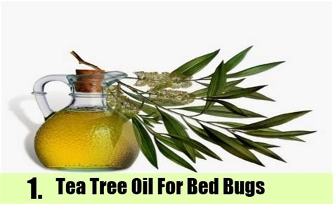 top how to kill bed bugs home remedies on home remedies to