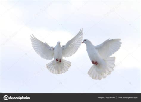 imagenes palomas blancas volando par de palomas blancas volando en el cielo de invierno