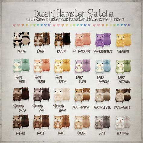 hamster colors hamster gacha color chart secondlife