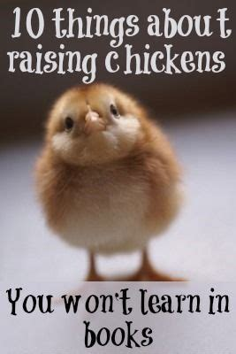 things they won t tell you the solution books 550 best images about raising chickens poultry on