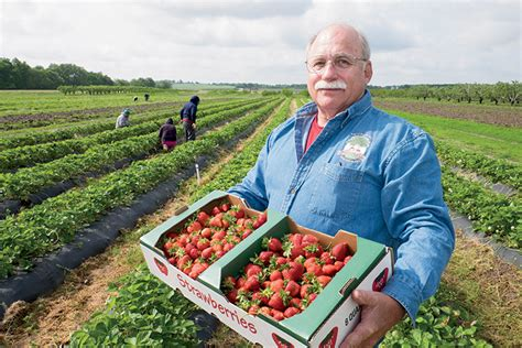 strawberry central  schwartz orchard illinois farm